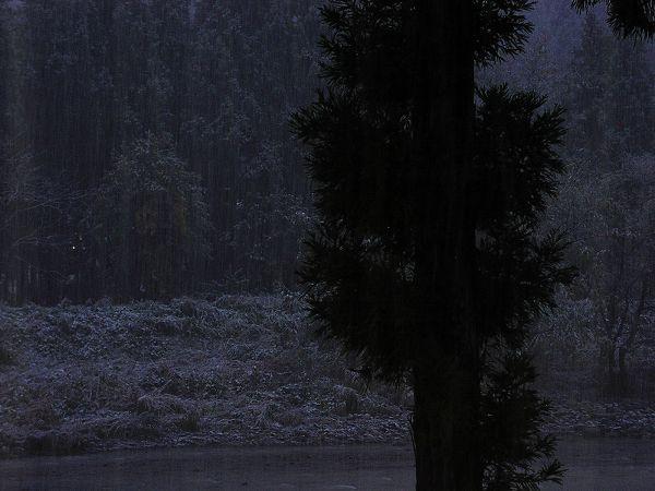 夕方近くになって初雪が降り始めました