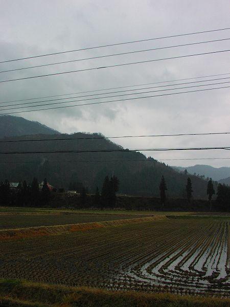 朝からずっと冷たい雨が降っています
