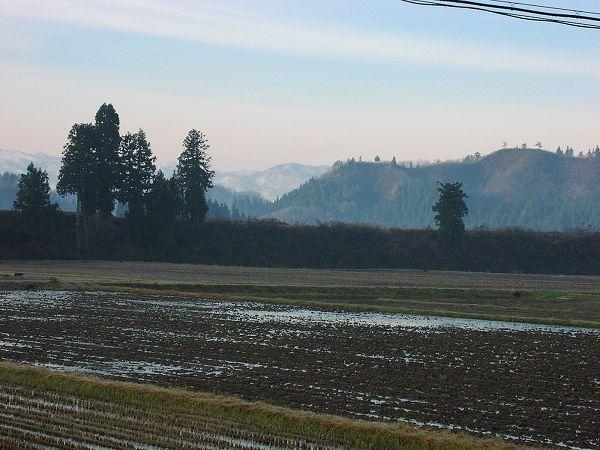 今朝は冷え込んで田んぼの水が凍っています