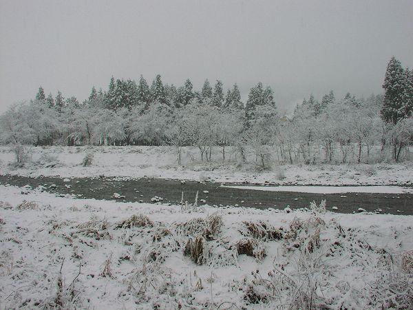 昨晩からの雪で今朝はすっかり冬景色です