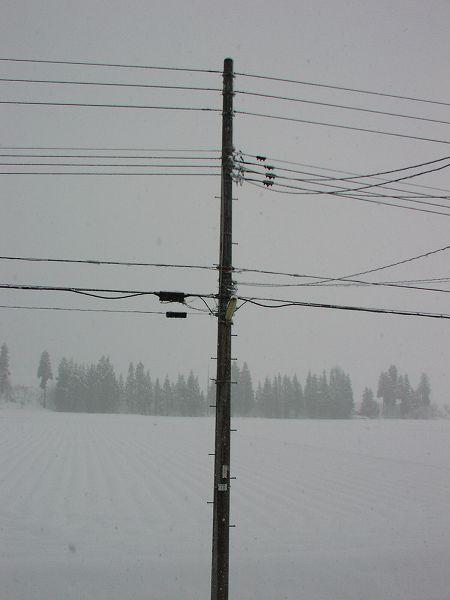魚沼は大雪・・・今日も降り続いています