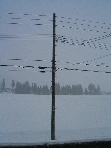 午後になって雨から雪に変わりました