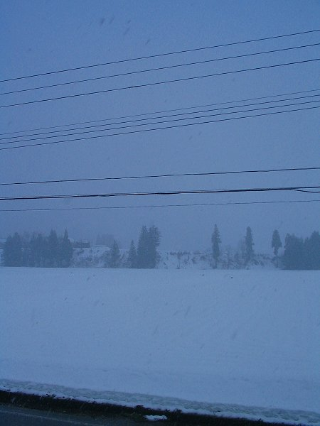 魚沼産コシヒカリの田んぼでは今朝も雪が降っています