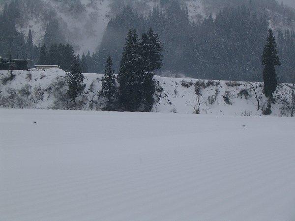 やや湿った雪が降っています