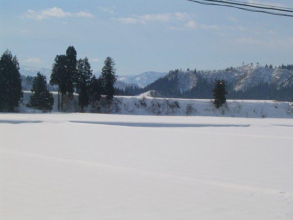今日もいい天気で田んぼの雪面がまぶしいです