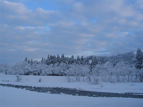 今朝の魚沼産コシヒカリの田んぼは雪が止んでいます
