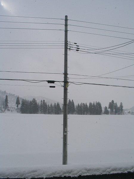 思ったほど雪は積もりませんでした