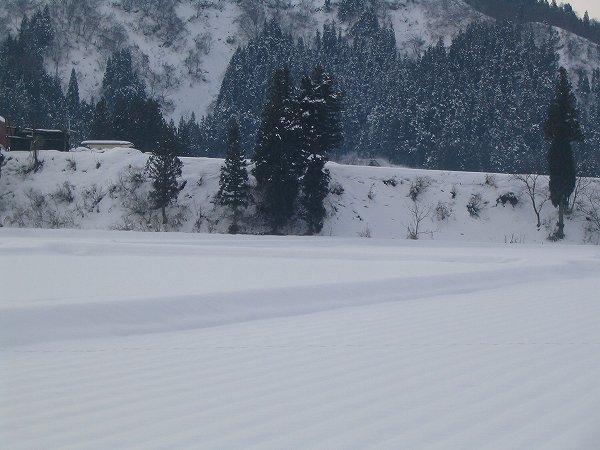 いまのところ、雪が少ない冬です