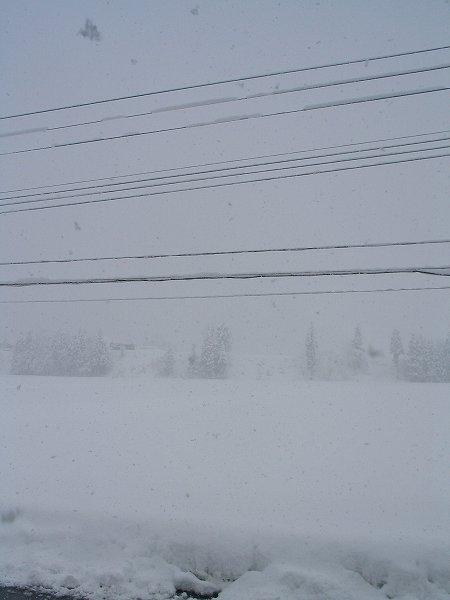 昨晩から雪がけっこう降りました