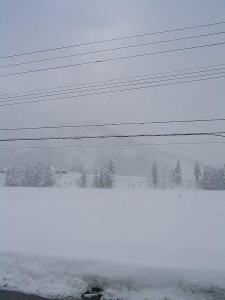 今朝も魚沼産コシヒカリの田んぼでは雪が降っています