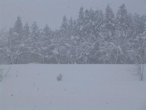 雪が強めに降っています