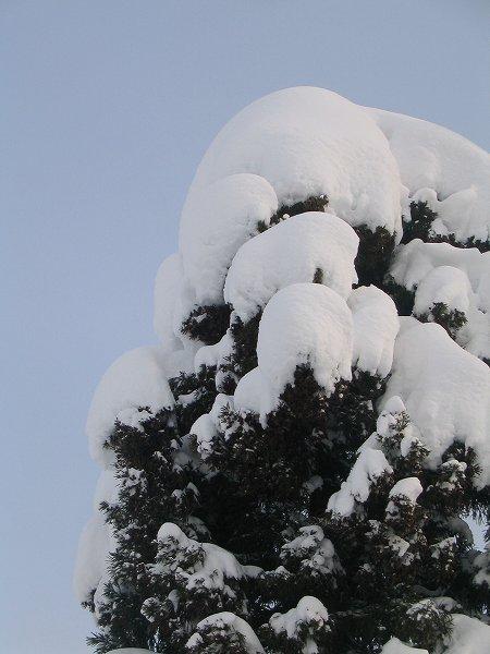 雪が止んで静かな朝です