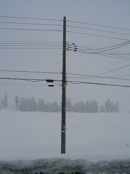 先ほどから雪が降り出しました