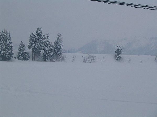 10cmくらい雪が積もりました