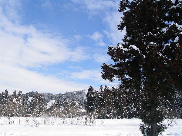 青空が広がっていい天気になってきました