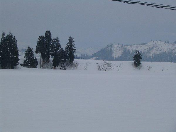 うっすらと雪が積もりました