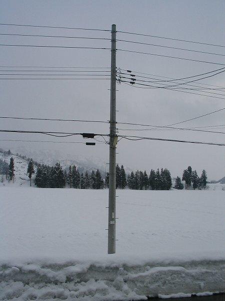 今日も湿った雪が降っています