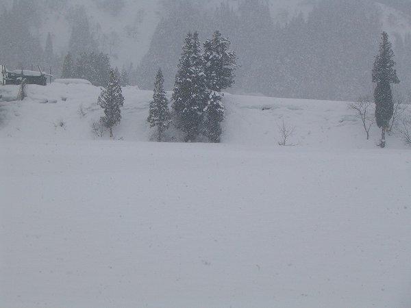 湿った雪が降っています
