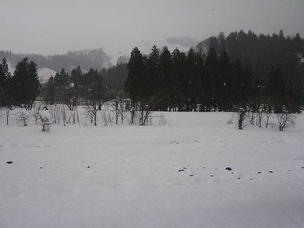 雪が解けて水無川の川底の石が見えてきました