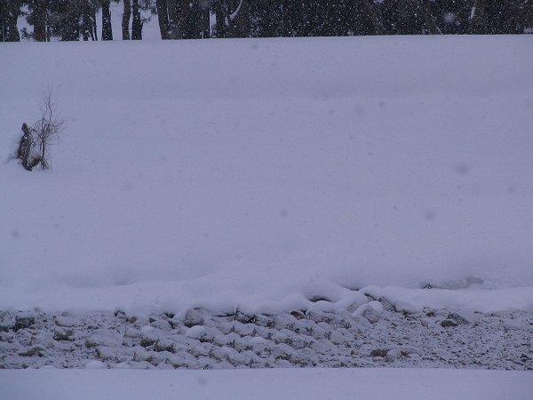水無川の川底もまた雪で白くなっています