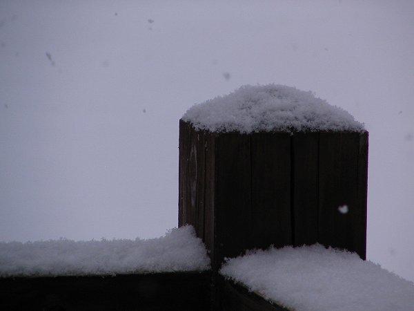 今朝はうっすらと雪が積もりました