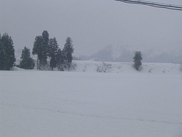 昨晩から少し雪が積もりました