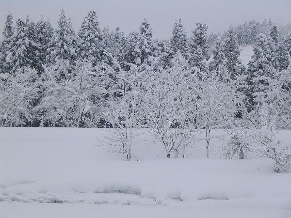ひと晩で40cmくらい雪が積もりました