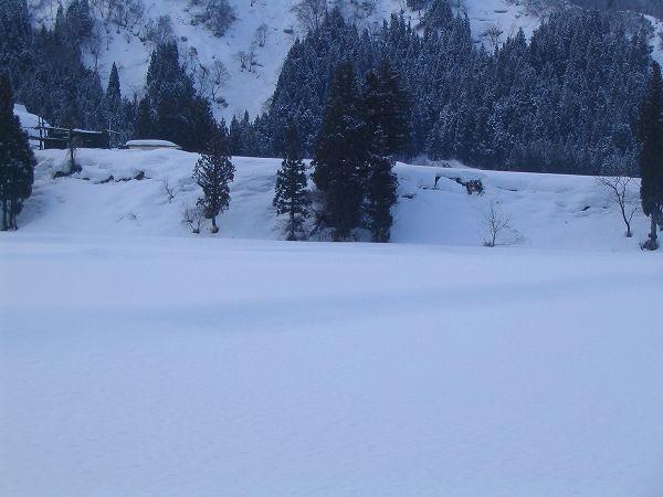 今朝、魚沼産コシヒカリの田んぼには少し雪が積もっていました