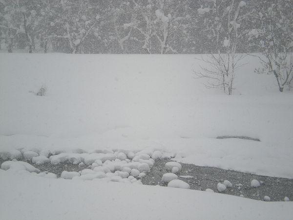 昨晩もまたたくさん雪が積もりました