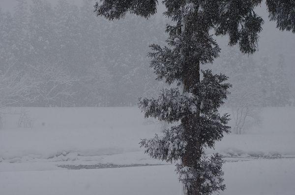 魚沼は真冬に戻りました