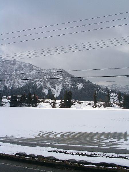 今朝は季節外れの吹雪でした