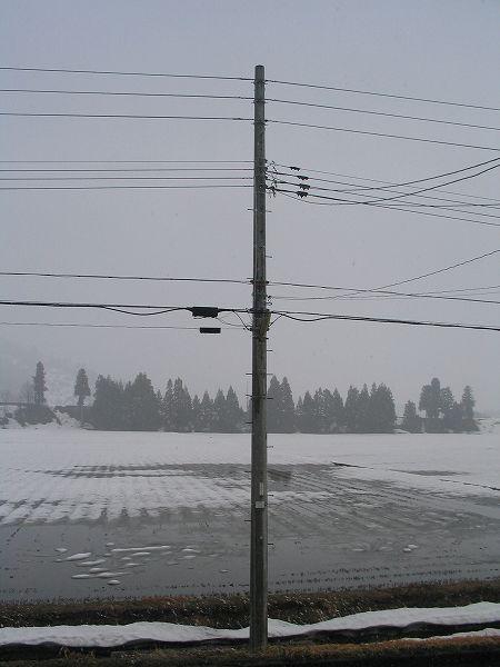 今日も魚沼産コシヒカリの田んぼは雪が降っています