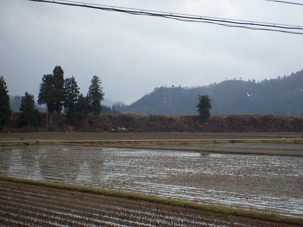 昨日から降っていた雨が今朝になって止んでいます