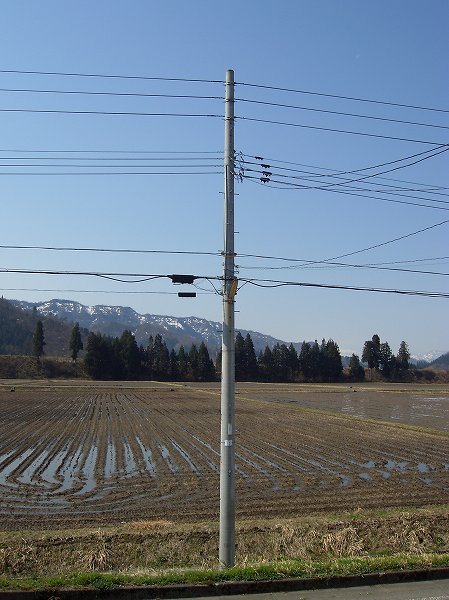 今朝の魚沼産コシヒカリの田んぼは青空が広がっていい天気です