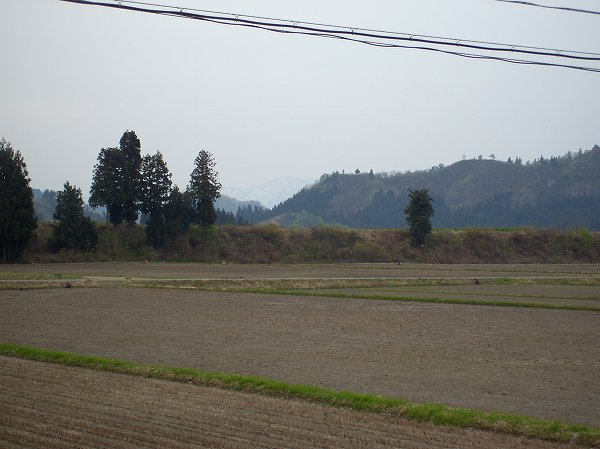 今朝の魚沼産コシヒカリの田んぼはあたたかいです