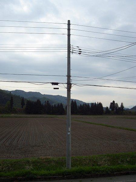 今朝はくもりで静かな田んぼです