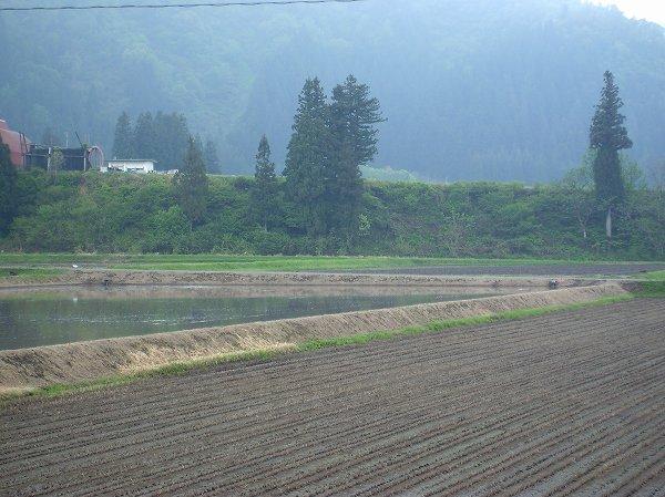 雨上がりの朝の田んぼ