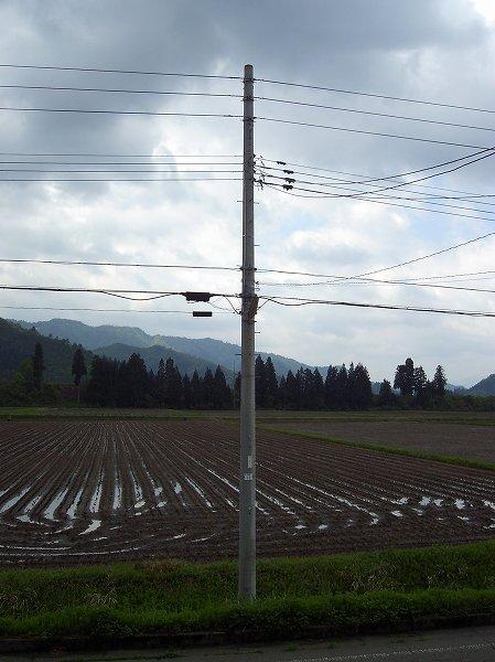 今朝も雨上がりの朝です@魚沼産コシヒカリの田んぼ