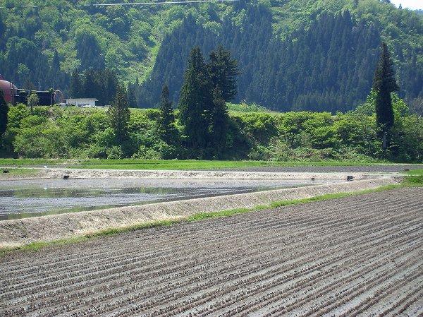 魚沼産コシヒカリの田んぼはよく晴れて農作業日和になっています