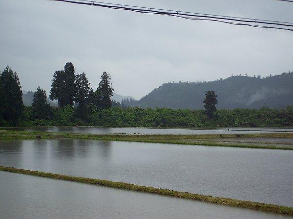 新潟県南魚沼市は気温が低く、雨が冷たく感じます