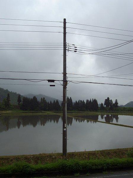 魚沼産コシヒカリの田んぼは弱い雨が降っています