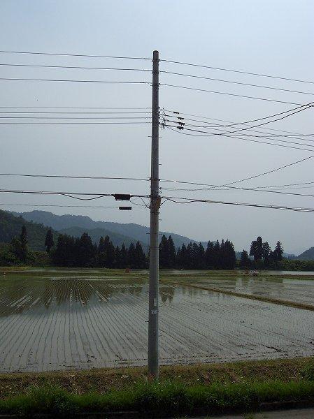 午前中に田植え作業が行われました