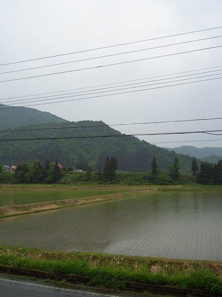 午後から雨になりました