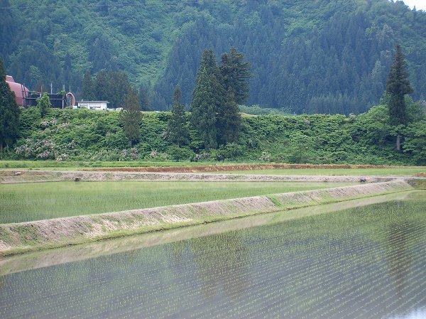田植えが終わって、田んぼは静かになりました