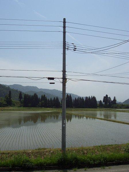 魚沼産コシヒカリの田んぼは今日もまた暑くなりました