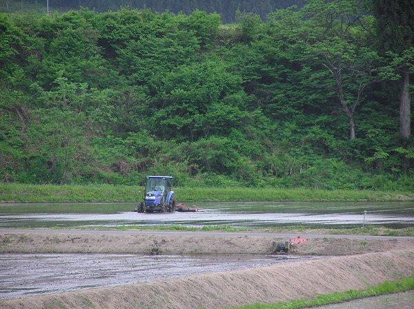 トラクターによる代かき作業が行われています
