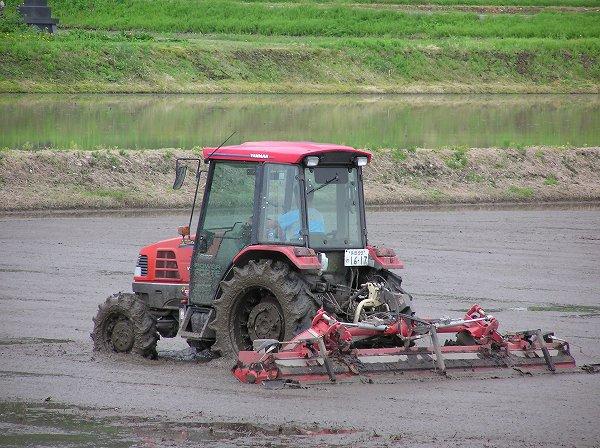 田んぼではトラクターによる代かき作業が続いています