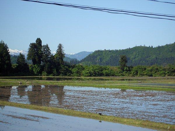 魚沼産コシヒカリの田んぼは澄んだ青空が広がって、農作業日和になっています