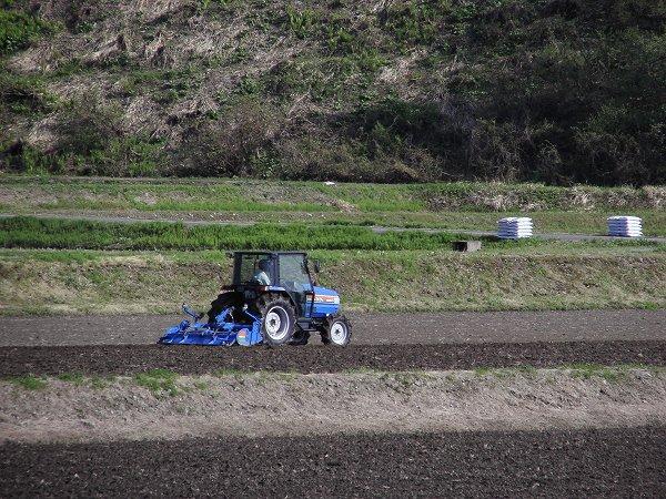 田んぼではトラクターによる田起こし作業が行われています