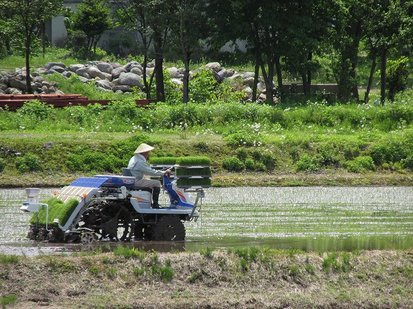 田んぼで田植え作業が始まりました